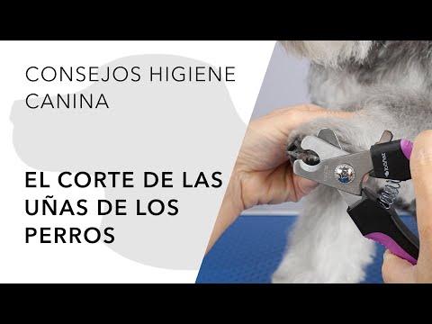 El corte de las uñas de los perros