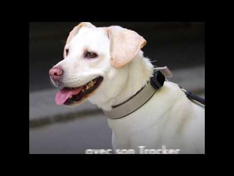 Le meilleur GPS pour chien et chat : la vidéo du test