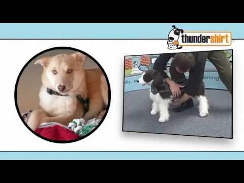 ¿Conoces las chaquetas anti ansiedad para perros? FAMILY DOG