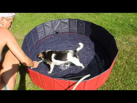 Femor Doggy Pool / Hundepool