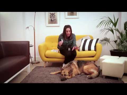 Cómo aplicar una pipeta antiparasitaria a tu perro