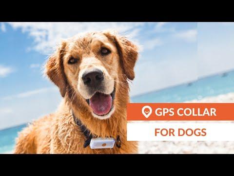 Dog GPS tracker | Weenect Dogs 2 (EN)