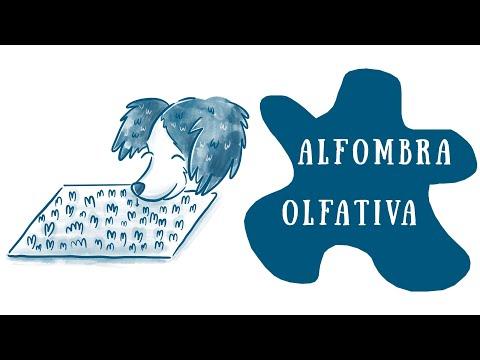 Cómo hacer una ALFOMBRA OLFATIVA para tu perro