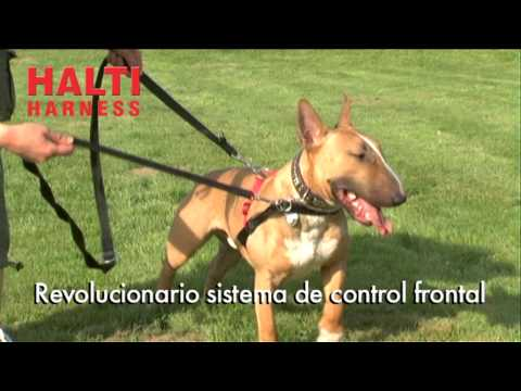 Halti Harness