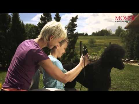 MOSER Animal commercial