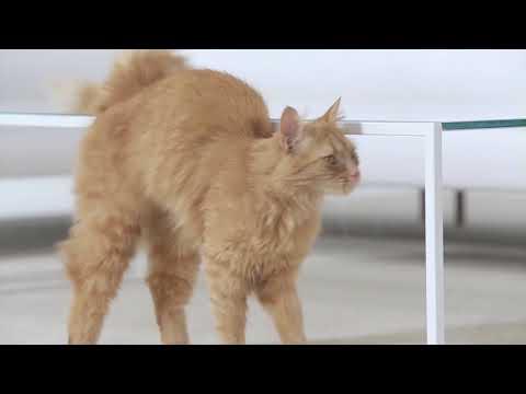 🐶 La Aspiradora para Mascotas que estabas buscando