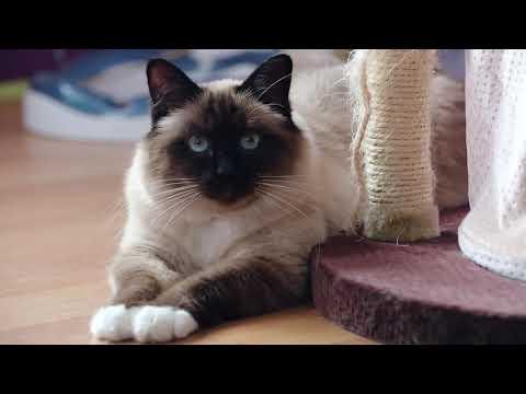 Cómo hacer que tu gato deje de arañar en lugares inapropiados