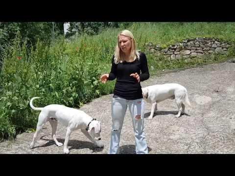 Un perro sordo puede acudir a la llamada
