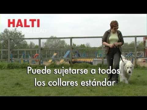 Halti Training Lead - Pocurull -