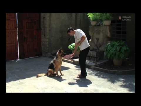 Adiestra a tu perro en positivo. Libro y DVD