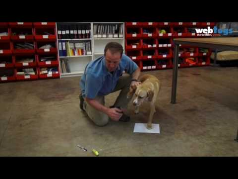 Ruffwear - How to measure Dog Paw Width for Grip Trex shoes