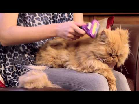 Cepillos de muda FURminator para gatos