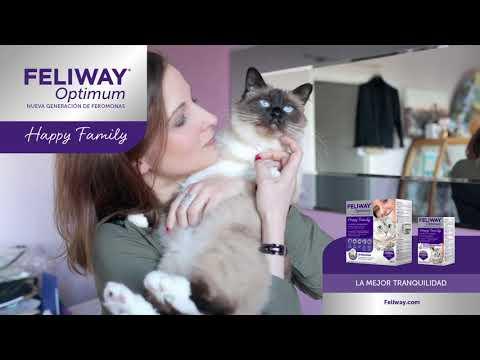 Cómo hacer que tu gato deje de marcar con orina