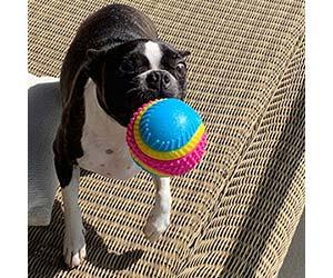 Pelota sensorial para perros ciegos - AVANZONA