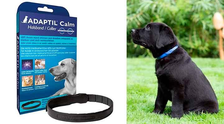 Collar antiestrés de feromonas para perros - Adaptil