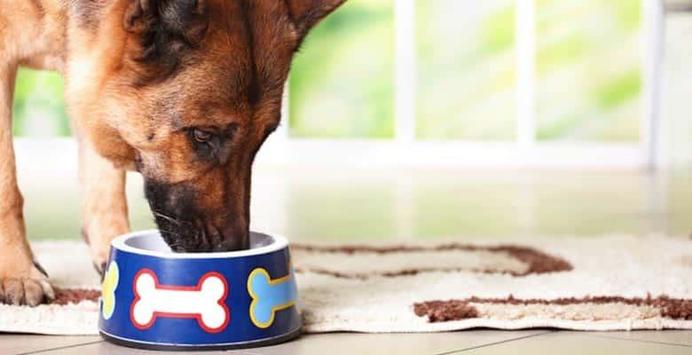 Alfombras para comederos de perros y gatos