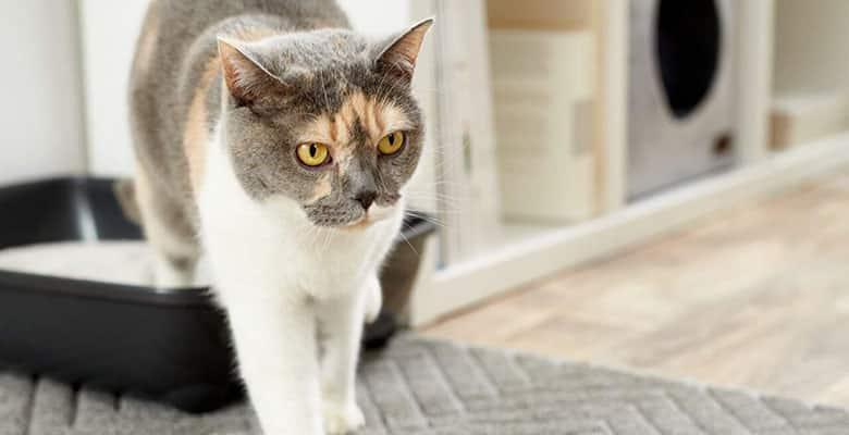 Alfombras para gatos