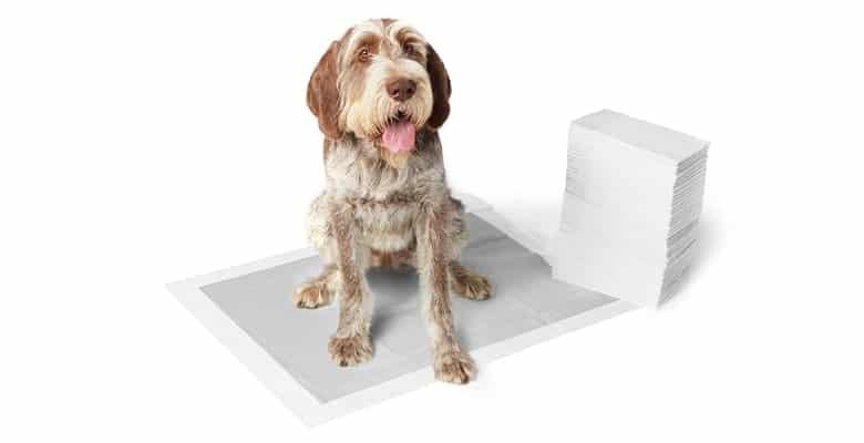 Empapadores para perros antiolores con carbón activo - AmazonBasics
