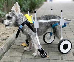 Silla con 4 ruedas para las patas delanteras y traseras del perro - Ann