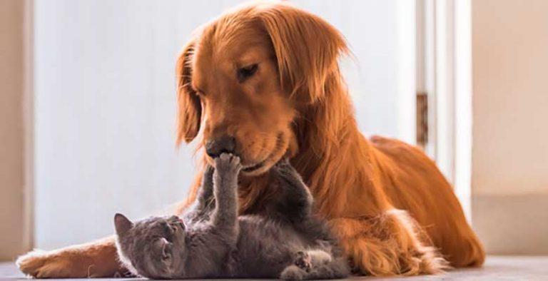 Antiparasitarios para perros y gatos