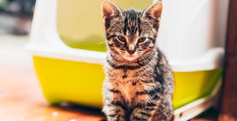 Areneros para gatos