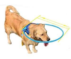 Arnés para perros ciegos (con aro protector) - Plifet