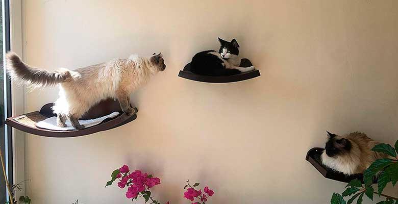Hamaca de pared para gatos - Art of Paws
