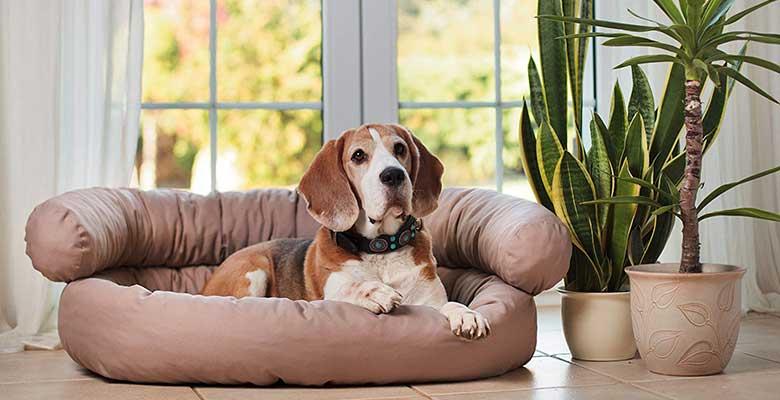 Sofá para perros con gran relación calidad-precio - Artur Soja