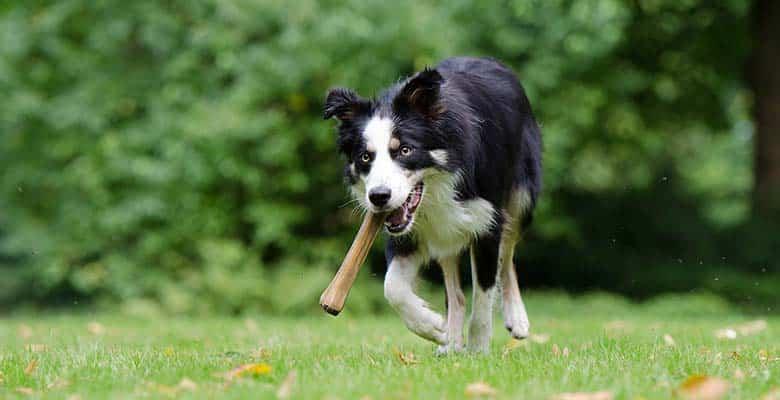 Astas y huesos para perros