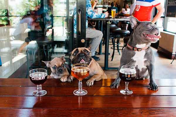 Bares y restaurantes dog-friendly en España