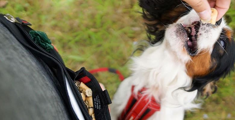 Bolsas de premios para perros