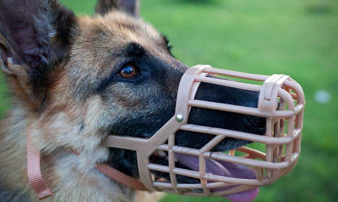 Bozales tipo cesta para perros