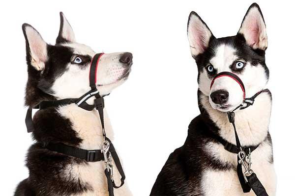 Bozal tipo Halti para perros