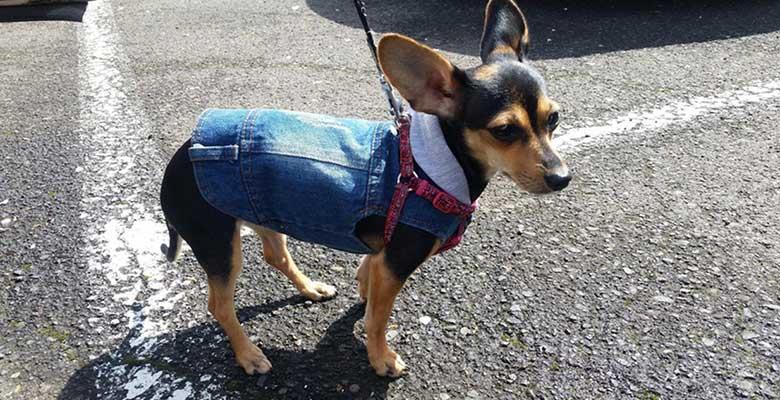 Camisetas, vestidos y trajes para perros