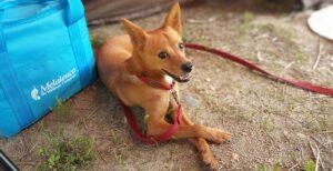 Camping con perro