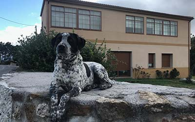 Casa Idalia - Casa rural en Ourense que admite mascotas - Cenlle (Galicia)