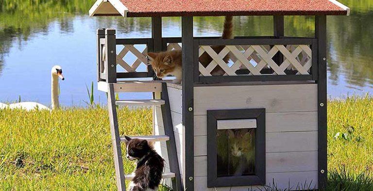 Casetas para gatos