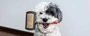 Peines y cepillos para perros y gatos