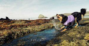 Chalecos refrescantes para perros