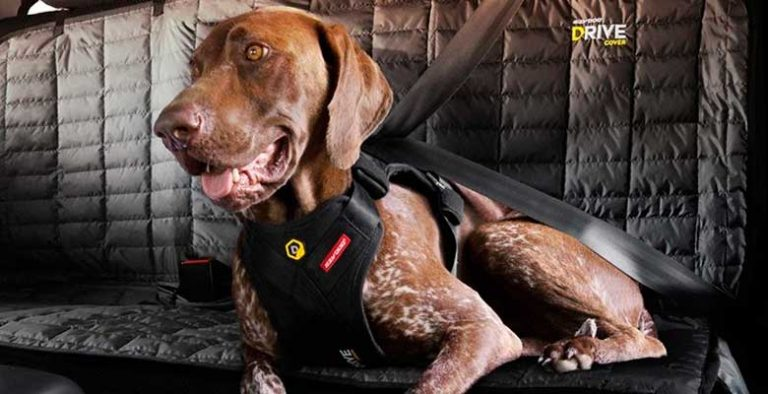 Cinturones, arneses y asientos de seguridad para llevar al perro en coche