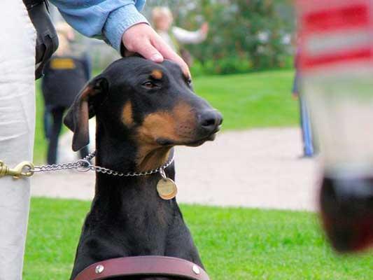 Collar de ahorque para perros