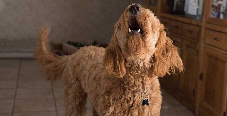 Collares antiladridos para perros