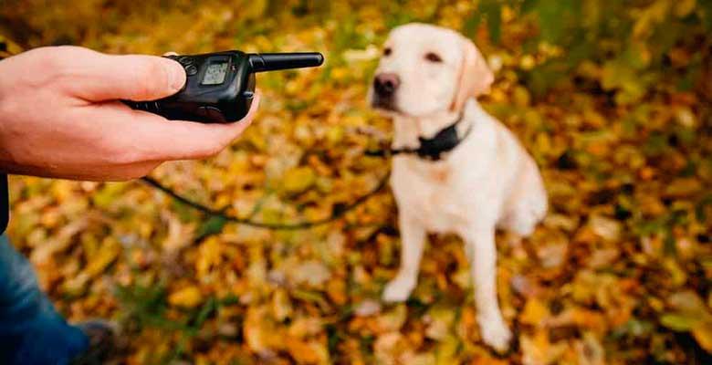 Collares eléctricos de adiestramiento para perros