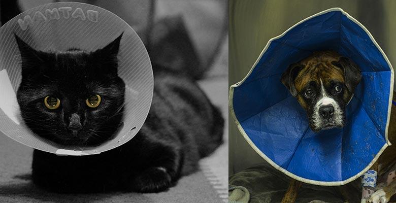 Collar isabelino para gatos y perros