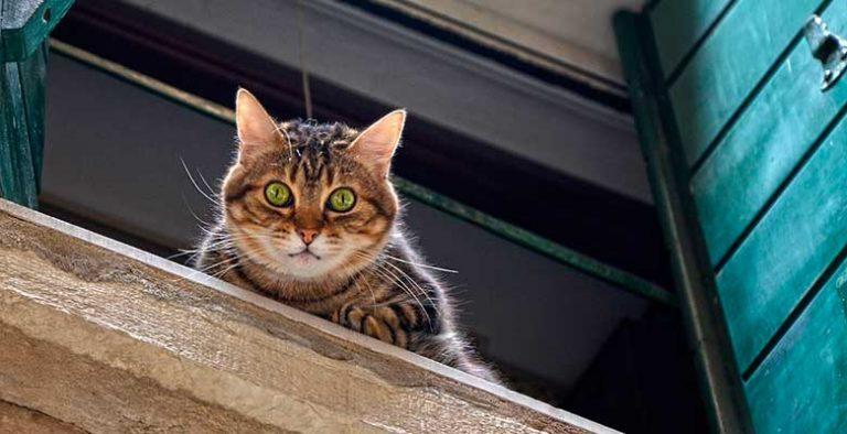 Cómo proteger a tu gato de caídas desde la ventana, terraza o balcón