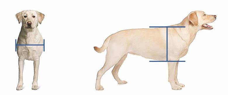 Cómo medir a tu perro para saber qué gatera comprar