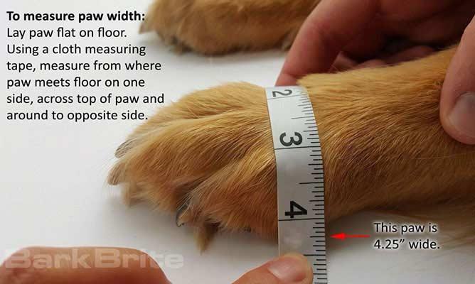 Cómo medir las patas del perro para comprarle unos zapatos