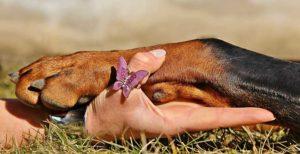 Cómo proteger las almohadillas del perro