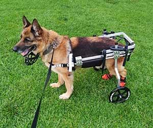 Silla de ruedas especial para perros grandes - Cora Pet