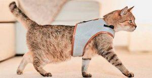Correas y arneses para gatos